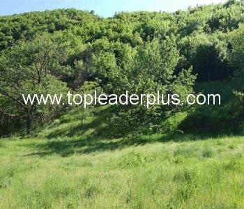 Продажба на имот от 1400 кв.м. в село на 3 км от град Кресна